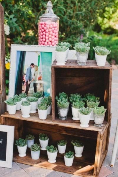 Суккуленты на свадьбе: как их можно использовать